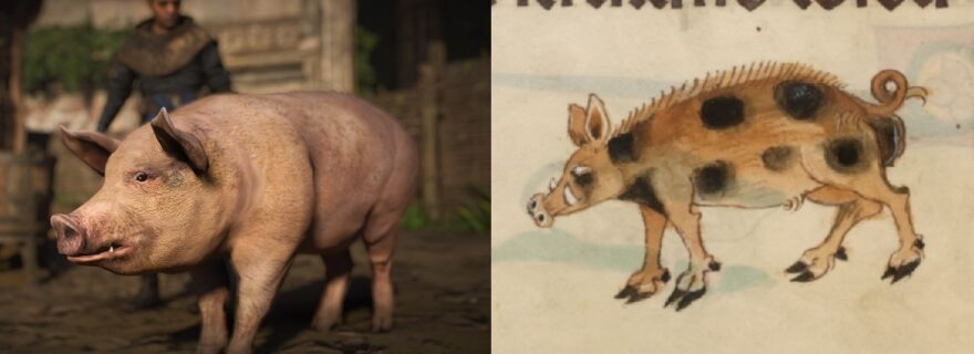 What's wrong with medieval pigs in videogames?