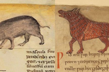 Pig Pharma: Some Uses of Swine in Early Medieval English Medicine