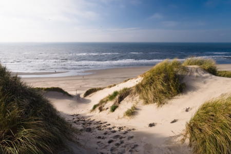 "Dune protection and ""environmental law"" in late medieval Zeeland"