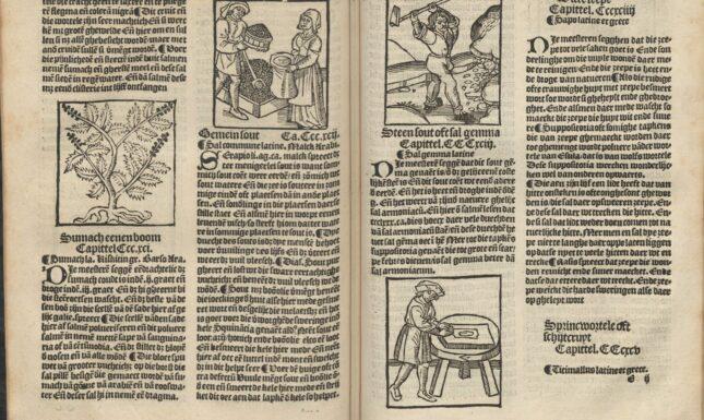 Blog fig 2 Herbarius 1526 E1v E2r