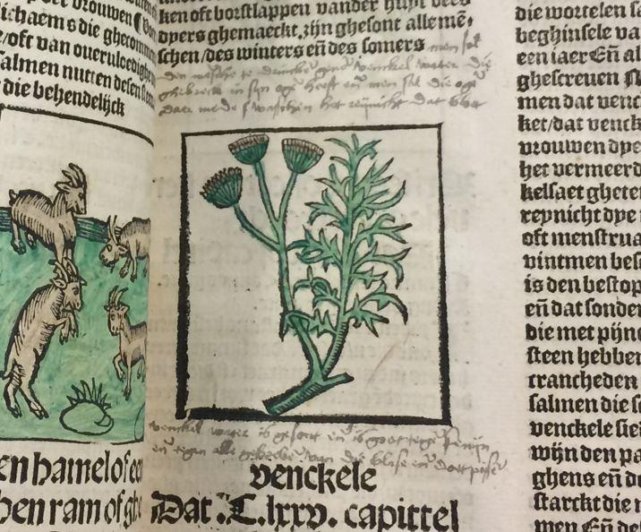 Blog fig 3 Herbarius 1514 Boerhaave p2r annotatie venkel